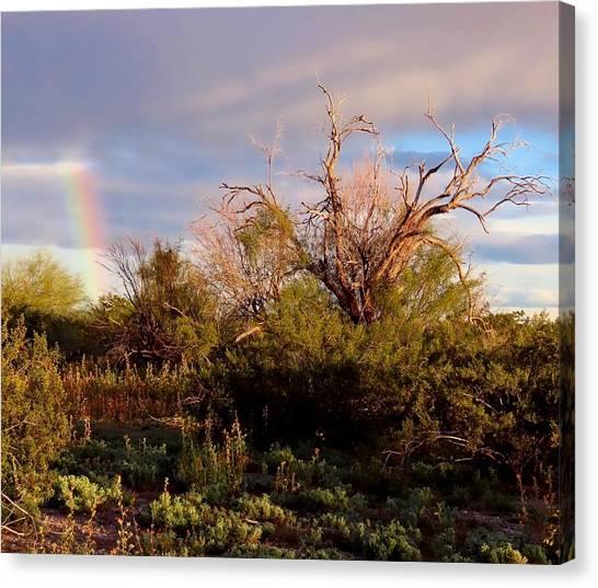 Sonoran Desert Spring Rainbow Canvas Print
