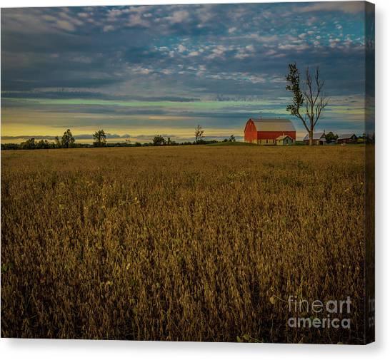 Soybean Sunset Canvas Print