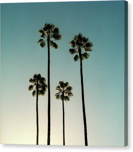 Spain, Sevilla, Palms Swaying In The Canvas Print