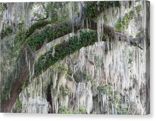 Spanish Moss Cascade Canvas Print