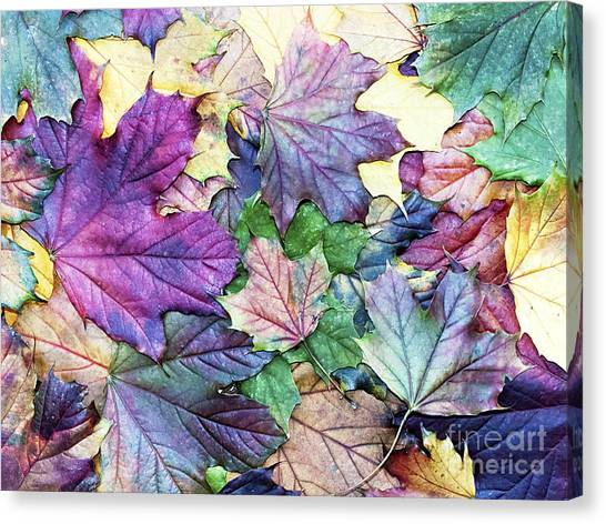 Botany Canvas Print - Special Colored Autumn Leaves by Ninii
