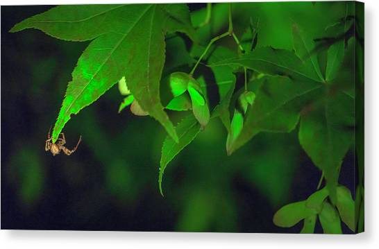 Spider At Night On A Leaf Canvas Print