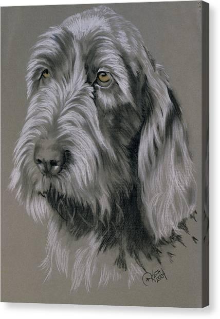 Canvas Print - Spinone Italiano Portrait by Barbara Keith