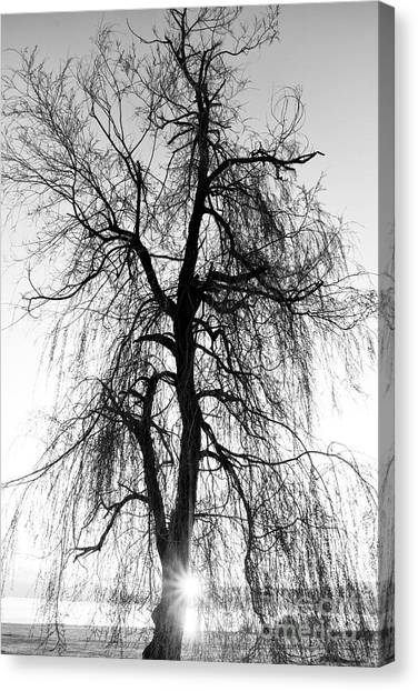 Grey Background Canvas Print - Spooky Abstract Black And White Tree by Ssokolov