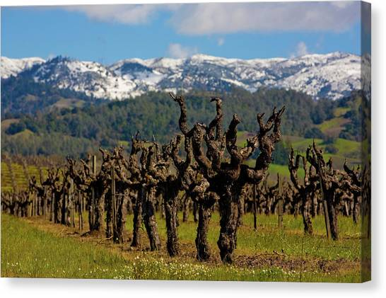 Sonoma Valley Canvas Print - Spring Arrives In Sonoma Countys by George Rose