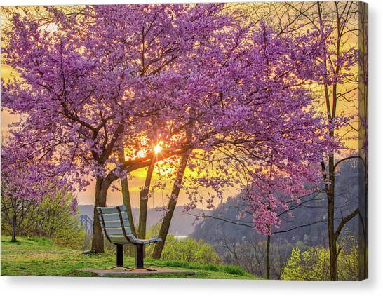 Spring Bench In Beaver 2 Canvas Print