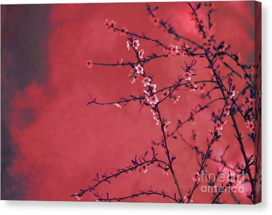 Chinese New Year Canvas Print - Spring Blossom Border Over Red Arty Textured Background. Chinese by Jelena Jovanovic