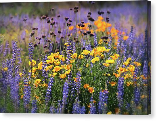 Canvas Print - Spring Flowers Along The Road  by Saija Lehtonen