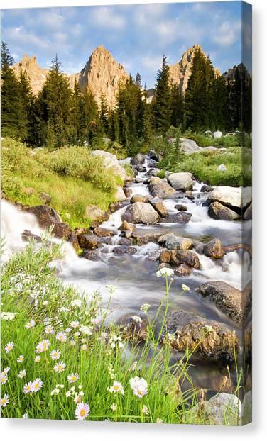 Spring Flowers And Flowing Water Below Canvas Print
