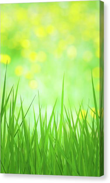 Blade Of Grass Canvas Print - Spring Grass by Borchee