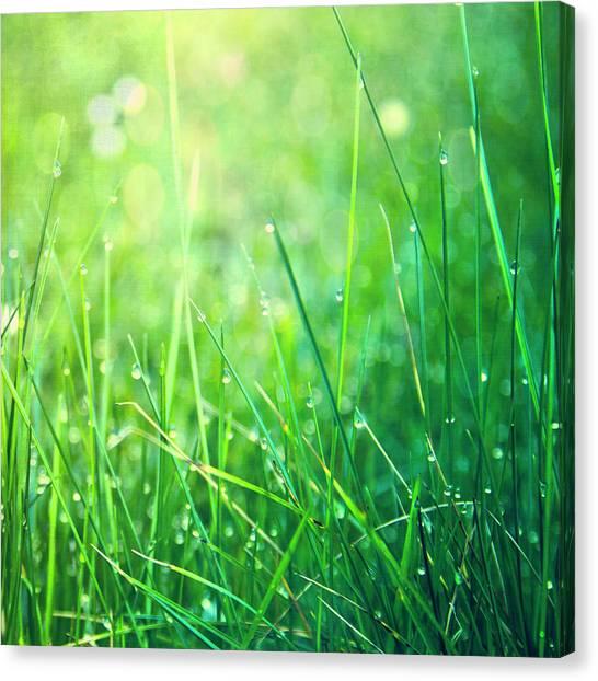 Blade Of Grass Canvas Print - Spring Green Grass by Dirk Wüstenhagen Imagery