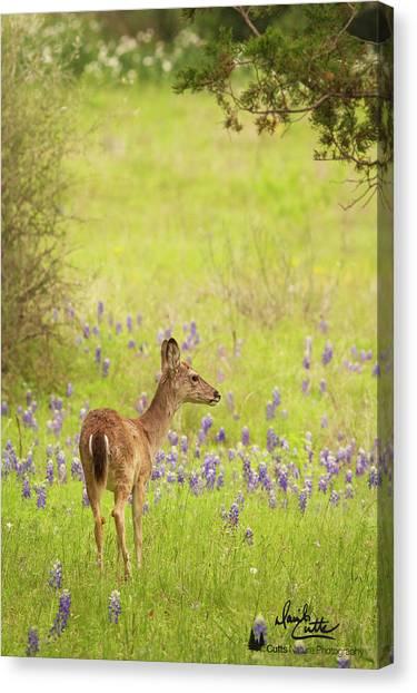 Springtime Whitetail Canvas Print