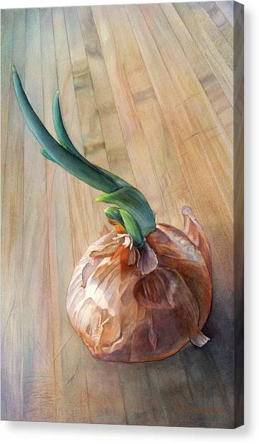 Onion Canvas Print - Sprouting Onion by Sandy Haight