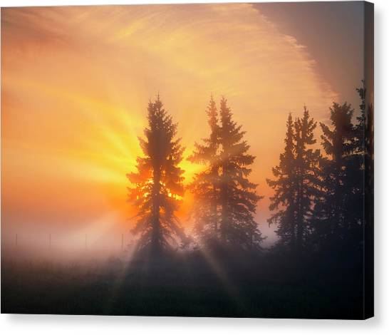 Spruce Trees In The Morning Canvas Print