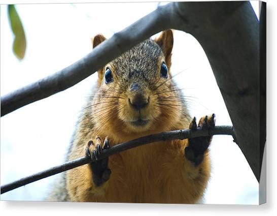 Spying Fox Squirrel Canvas Print