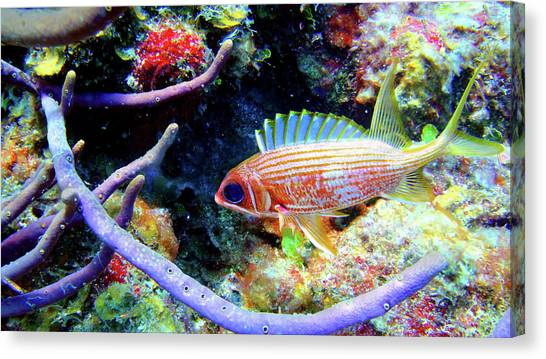 Squirrel Fish Canvas Print