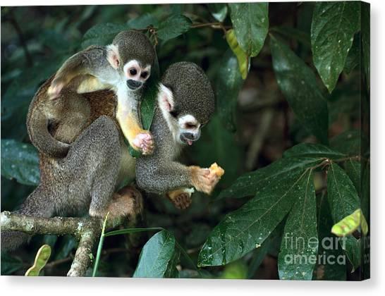 South American Canvas Print - Squirrel Monkey In Amazon Rainforest by Ksenia Ragozina