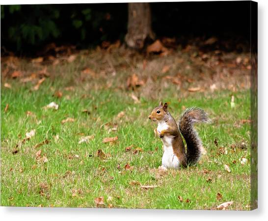 Canvas Print featuring the photograph Squirrel Stood Up In Grass by Scott Lyons
