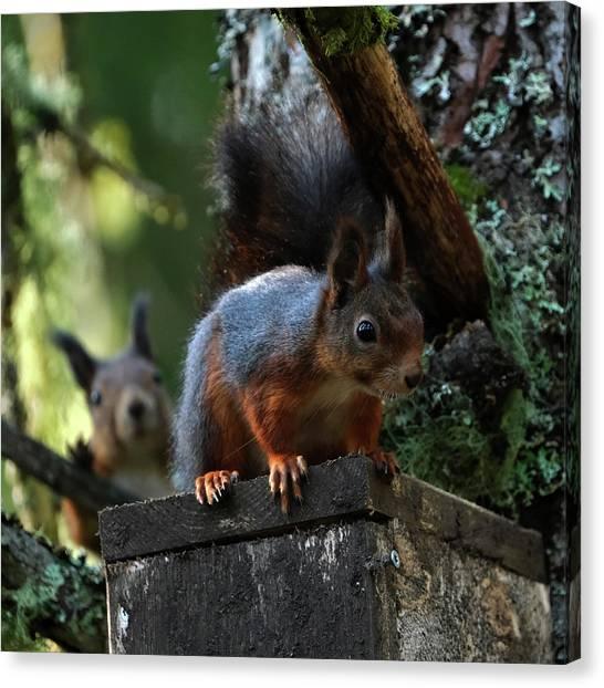 Squirrels Canvas Print