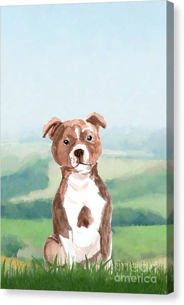 Purebred Canvas Print - Staffordshire Bull Terrier by John Edwards