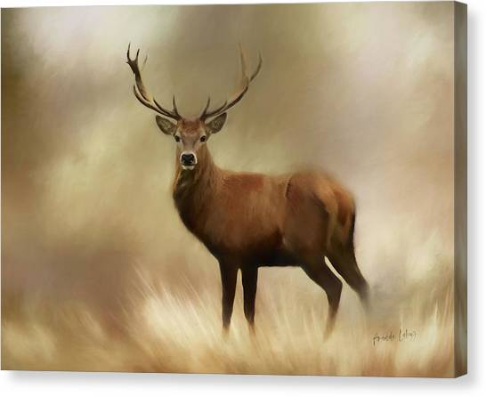 Canvas Print - Stag Pride by Amanda Lakey