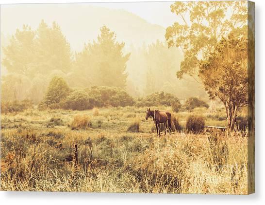 Equestrian Canvas Print - Stallion Homestead by Jorgo Photography - Wall Art Gallery