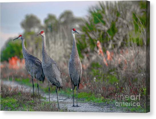 Canvas Print featuring the photograph Standing Sandhills by Tom Claud