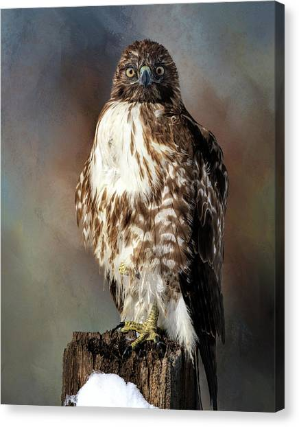 Stare Down With A Hawk Canvas Print