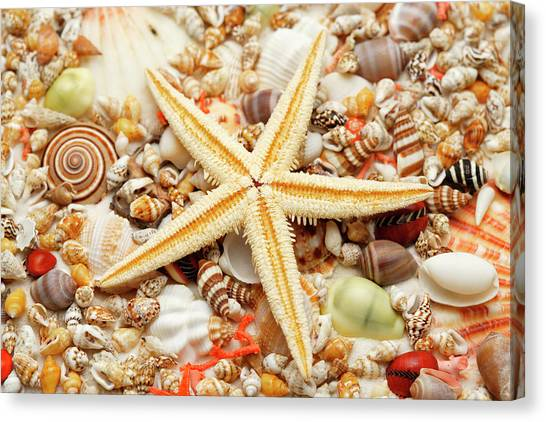 Starfish And Assorted Seashells Canvas Print by Imagemore Co.,ltd.