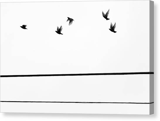 Starlings Flyby Canvas Print