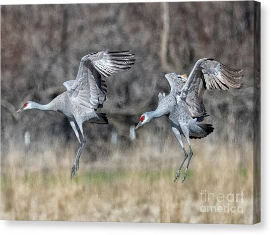 Sandhill Crane Canvas Print - Stay With Your Wingman by Mike Dawson