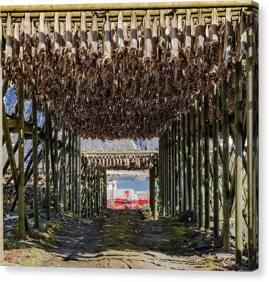 Stockfish Canvas Print
