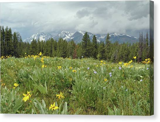 Stormy Tetons And Flowers Canvas Print
