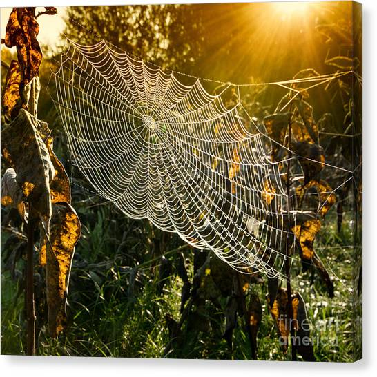 Bush Canvas Print - Strings Of A Spiders Web In Back Light by Budimir Jevtic