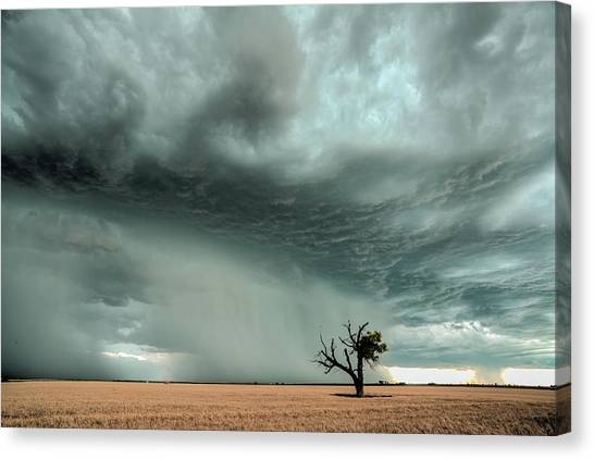 Strong Lone Tree Canvas Print