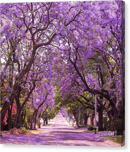 Style Canvas Print - Stunning Alley With Wonderful Violet by Dendenal