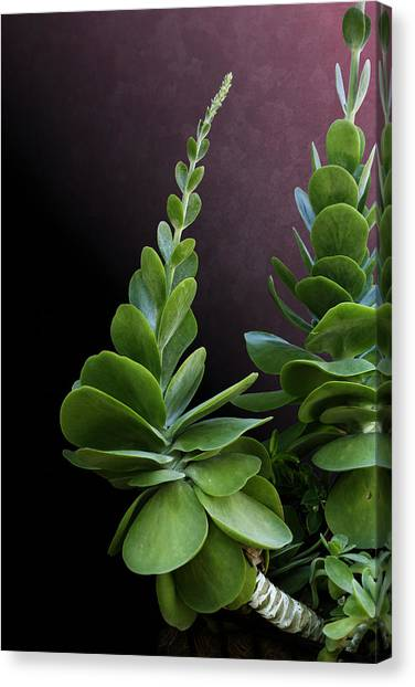 Succulent Spear Canvas Print