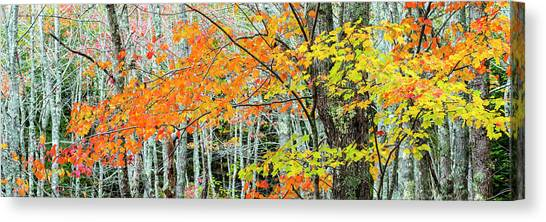Canvas Print - Sugar Maple Acer Saccharum In Autumn by Panoramic Images