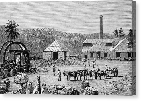 Sugar Mills Canvas Print by Hulton Archive
