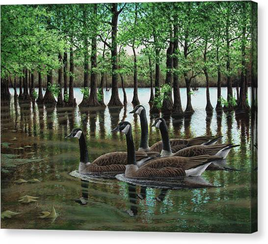 Summer Among The Cypress Canvas Print