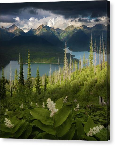 Summer Bloom / Hungry Horse Reservoir, Western Montana  Canvas Print
