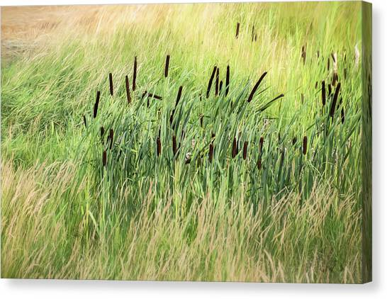 Summer Cattails In Field Of Grass - Canvas Print