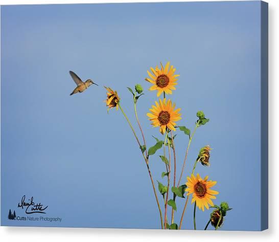 Summer Day Hummingbird Canvas Print