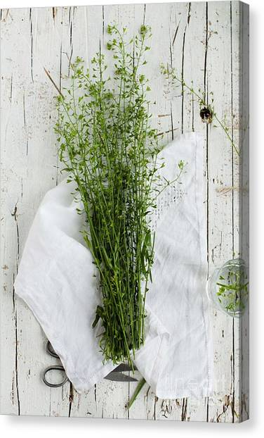 Nature Still Life Canvas Print - Summer Day With Wild Grass. Top View by Casanisa