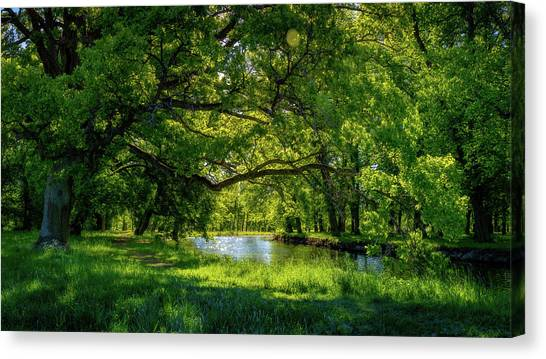 Woodland Canvas Print - Summer Morning In The Park by Nicklas Gustafsson