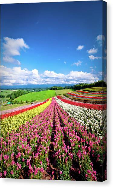 Summer Of Furano Canvas Print