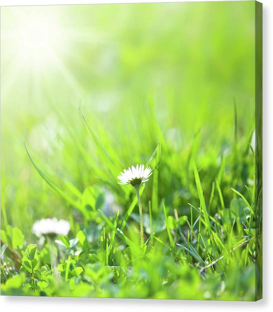 Blade Of Grass Canvas Print - Summer Time by Jeja