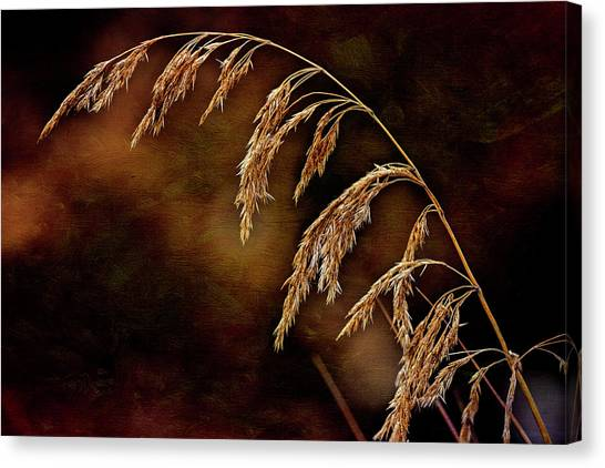 Canvas Print featuring the photograph Summer's Passed by Fred Denner