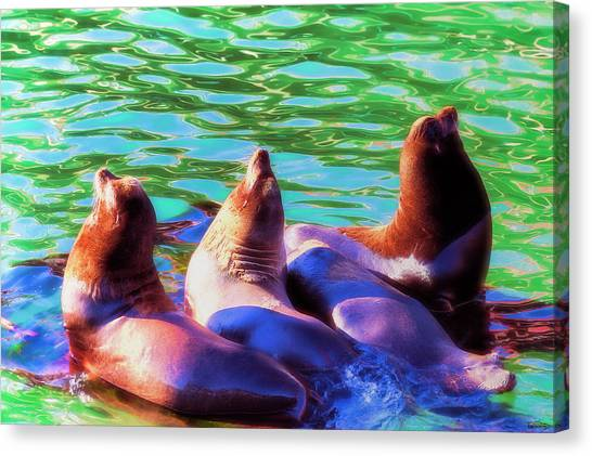 Sun Basking Seals Canvas Print