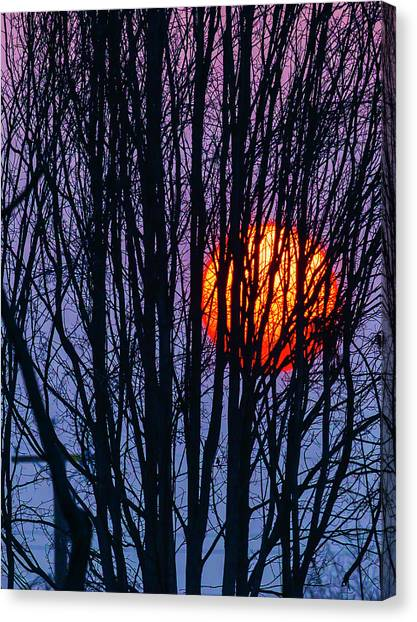 Sun Set Canvas Print - Sun Caught In Tree Branches by Garry Gay